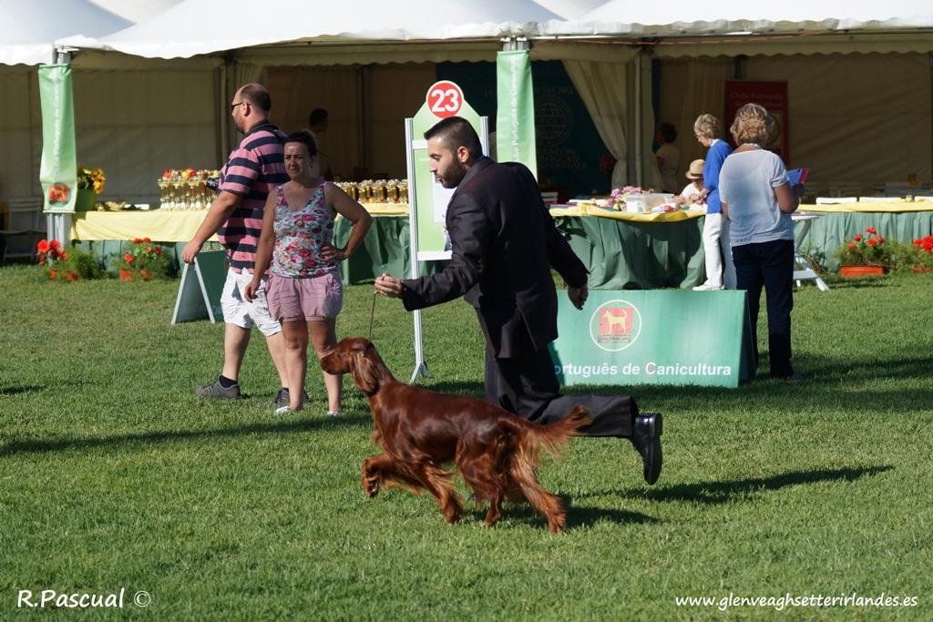 Doble Exposición Internacional Canina de Lisboa – Winner + CAC-QC, Lisboa 2015