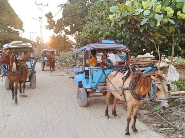 cidomo horse carts on Indonesia's gili islands