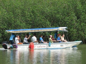 Learning about the mangrove ecosystem