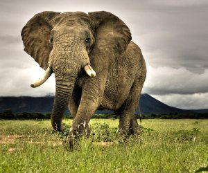 How to Protect Elephants
