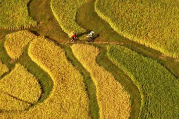 china-farmland_0