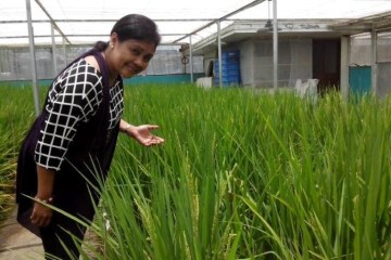2014 Apr_Rosalie Ellasus learning about Golden Rice at IRRI in Philippines