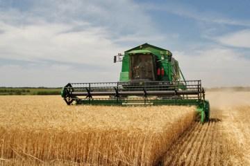 Agriculture_in_Volgograd_Oblast_002