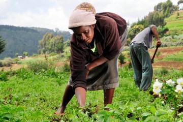 Woman_farmer_in_Kenya