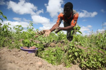 Farmer_Steven_of_Malawi_2