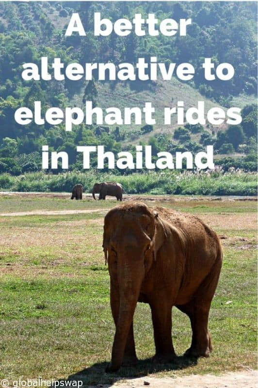 A-better-alternative-to-elephant-rides-1