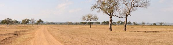 A panorama of the Mikumi National Park in Tanzania. Photo by Muhammad Mahdi Karim.