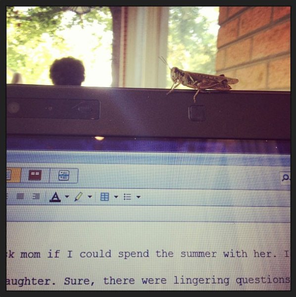 grasshopper-writing