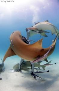 ataque de un tiburón Morales Fallon