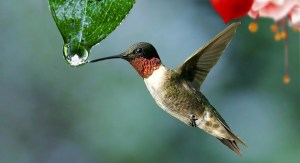colibri Morales Fallon