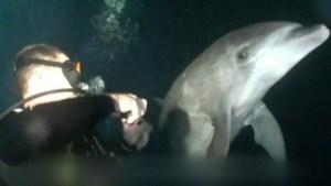 delfín Morales Fallon