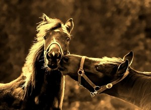 horses Morales Fallon