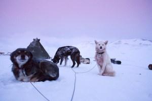 perro polar Morales Fallon