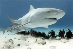 tiburon Morales Fallon