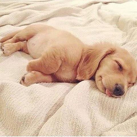 Feliz da para todos sleep dream dreams love ilovemydog Cutehellip