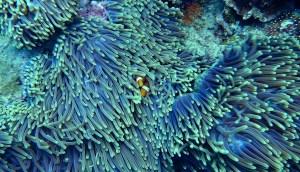 coral Morales Fallon