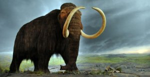 mamut Morales Fallon