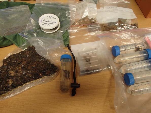 Samples from Gobholo Cave