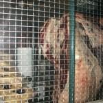 Meat closet