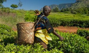 contadino Fairtrade