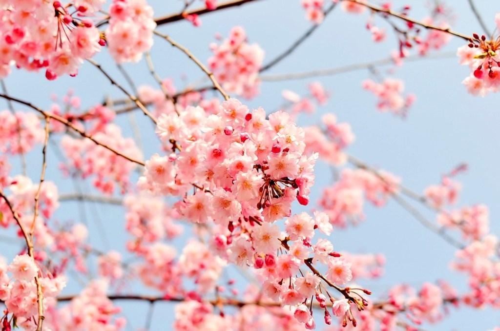 Consigli ecologici per aprile