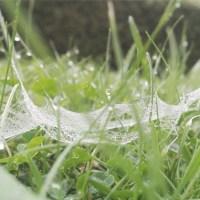 Taubedecktes Spinnennetz