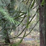 There's something enchanting about these moss covered branches