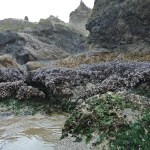 mossy sea rocks