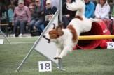 Shanti jumps a hurdle.