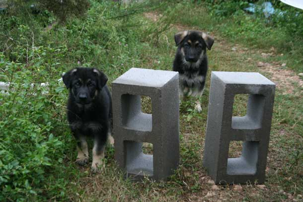 Puppies and Blocks