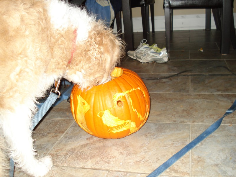 Large Of How Much Pumpkin To Give A Dog