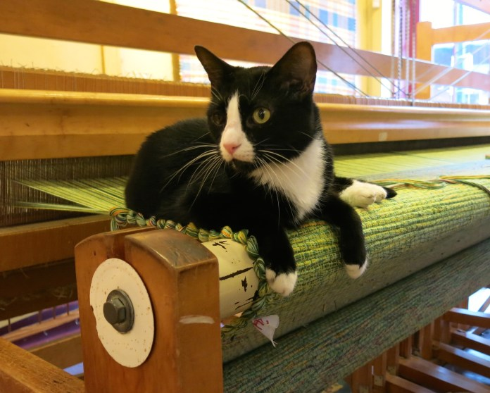 Biff on the loom. Photo credit: Christopher Garland.