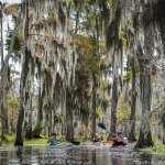 A kayak swamp tour through Shell Bank Bayou. (Photo: Rebecca Ratliff)