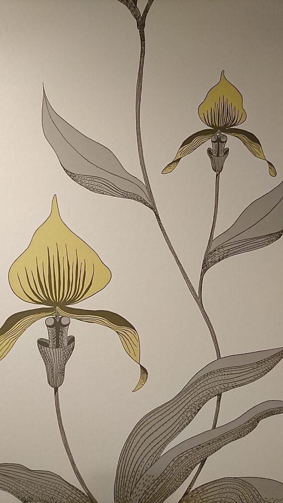 Orchid施行写真2