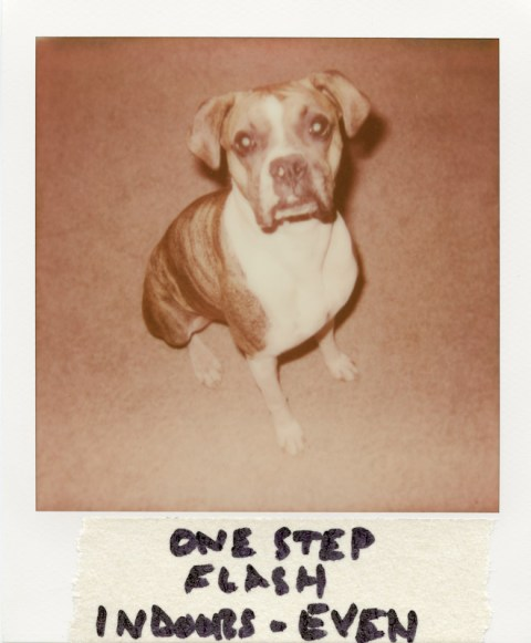 Polaroid OneStep Flash - PX680-V4B - Even Exposure