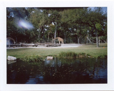 Photo: Amy Hirsch - Polaroid 100 Land Camera - Fuji FP-100C