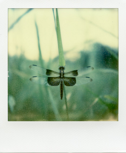 Polaroid SX-70 Sonar - Impossible Project PX-70 COOL