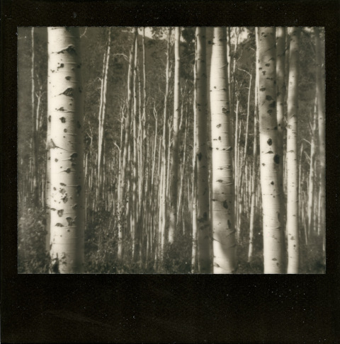 Photo: Synthia Goode - Polaroid Spectra - Impossible Project PZ-600