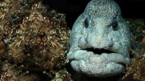 Aquarium After Hours
