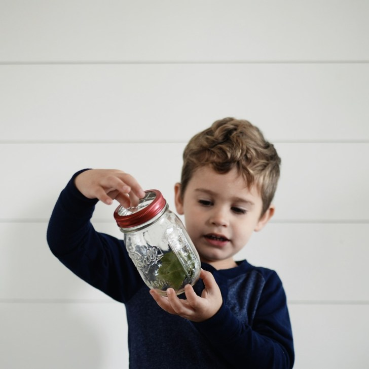 Toddler catching lady bugs
