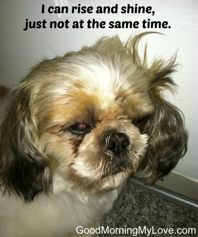 Funny Good Morning Meme For Her : Funny good morning meme half asleep dog cute