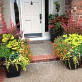 Barberry pots