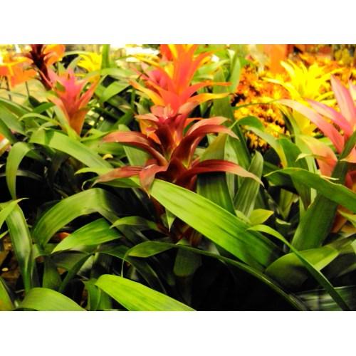 Medium Crop Of Home Depot Plants