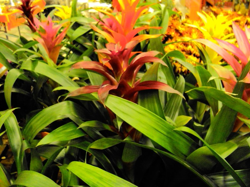Large Of Home Depot Plants