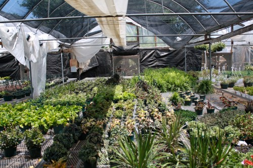 Medium Of Home Depot Gardening Center Plants