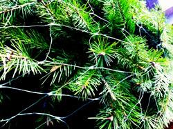 Tree-net-2012-thumb