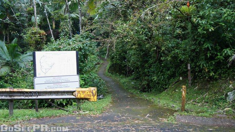 Bano de oro trail in the el yunque national forest of for Bano grande puerto rico