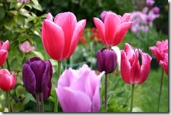 Лидия ГРИГОРЬЕВА. Тюльпаны