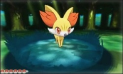 Fennekin-Pokemon