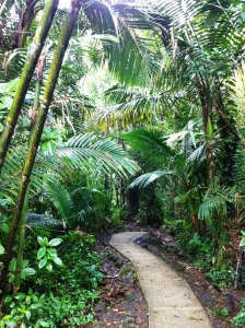 Enjoying some alone time walking through El Yunque rainforest on our last day in Puerto Rico.
